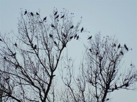 vogelbaum-Fotos-Nadia-Baumgart-2