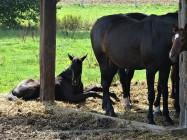 Pferde im Rottal