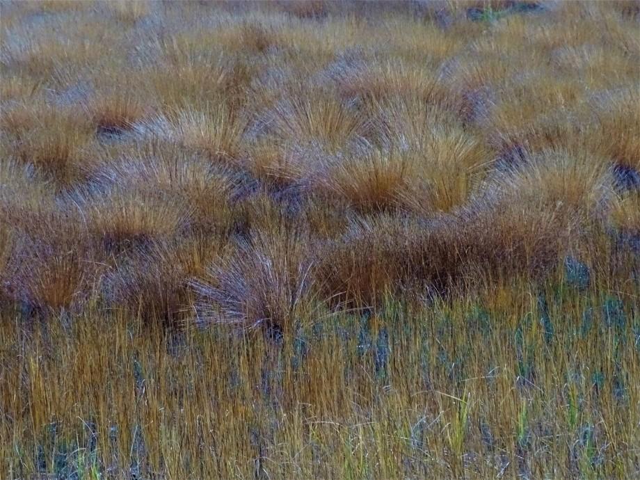 Schwinggras-Schwimmende-Inseln-Arbersee-Foto-Nadia-Baumgart