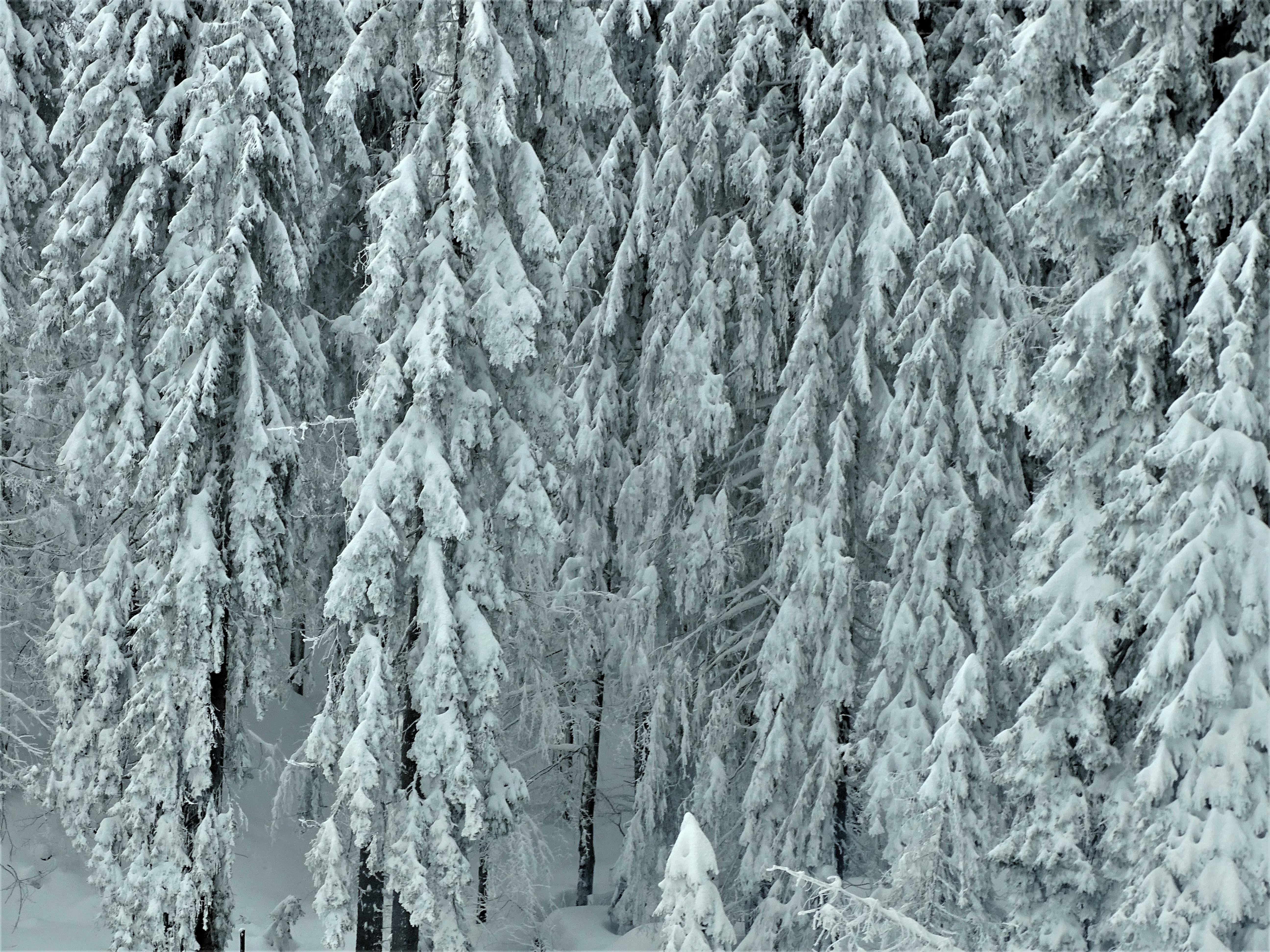 1-Am-Arbersee-im-Winter-Fotos-Nadia-Baumgart