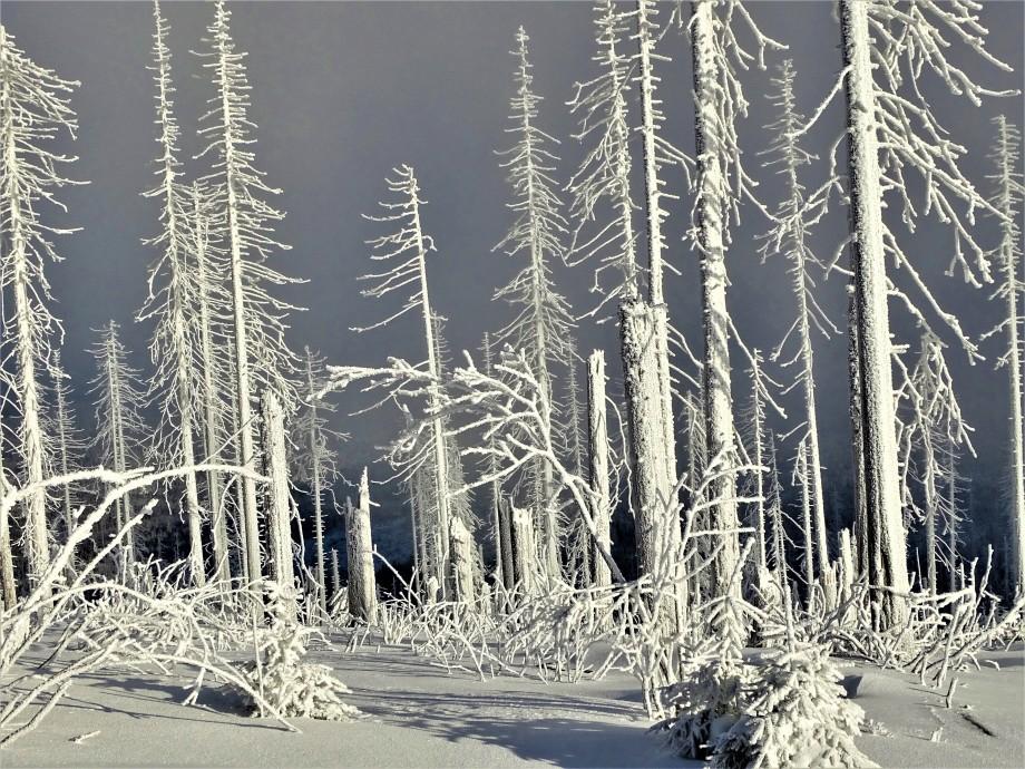 1-Dreisessel-Bayerischer-Wald-Foto-Nadia-Baumgart