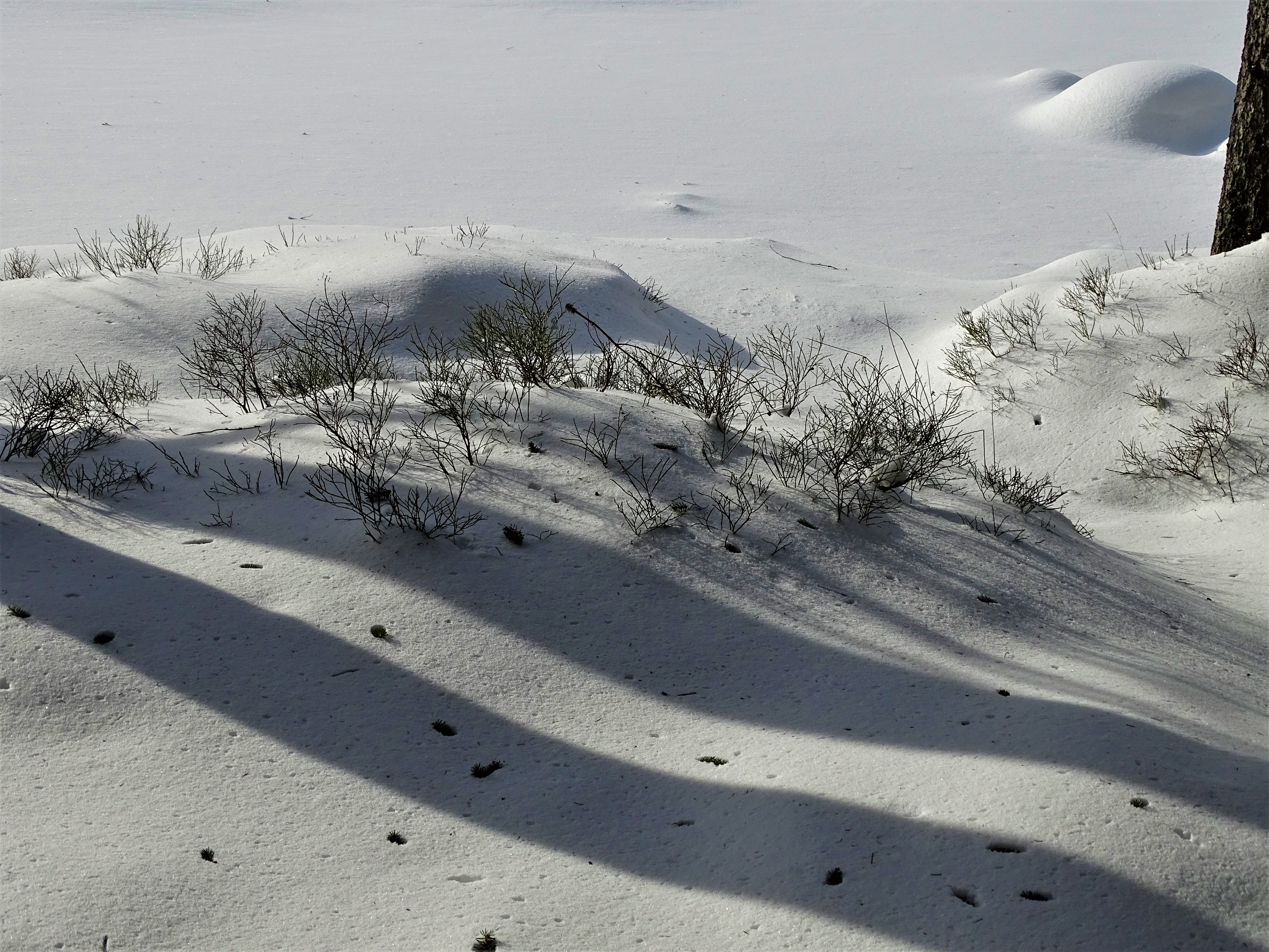 3-Am-Arbersee-im-Winter-Fotos-Nadia-Baumgart