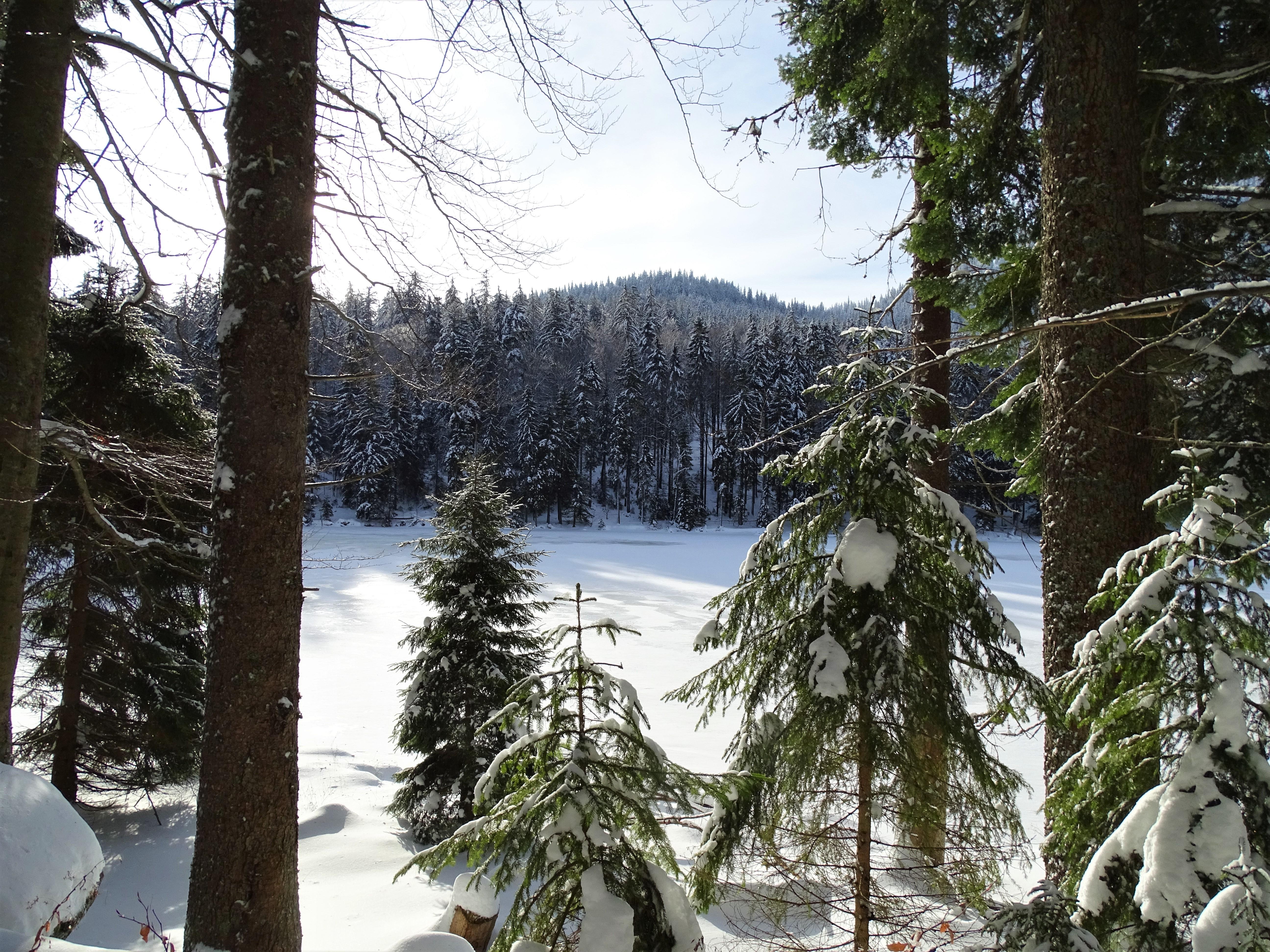 4-Am-Arbersee-im-Winter-Fotos-Nadia-Baumgart