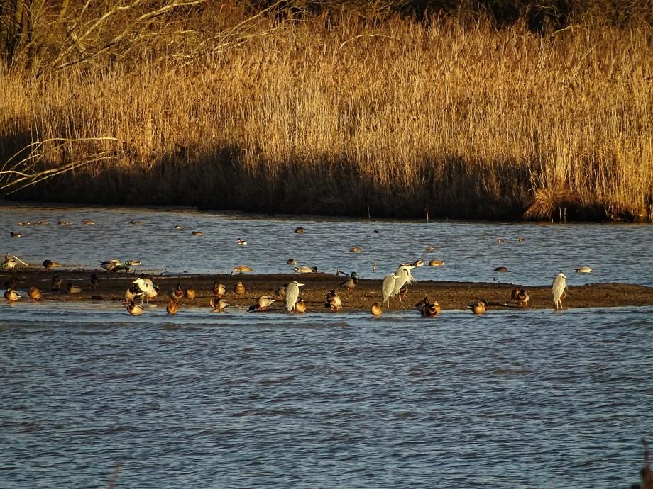 5-Vogelbeobachtung-Chiemsee-Foto-Nadia-Baumgart