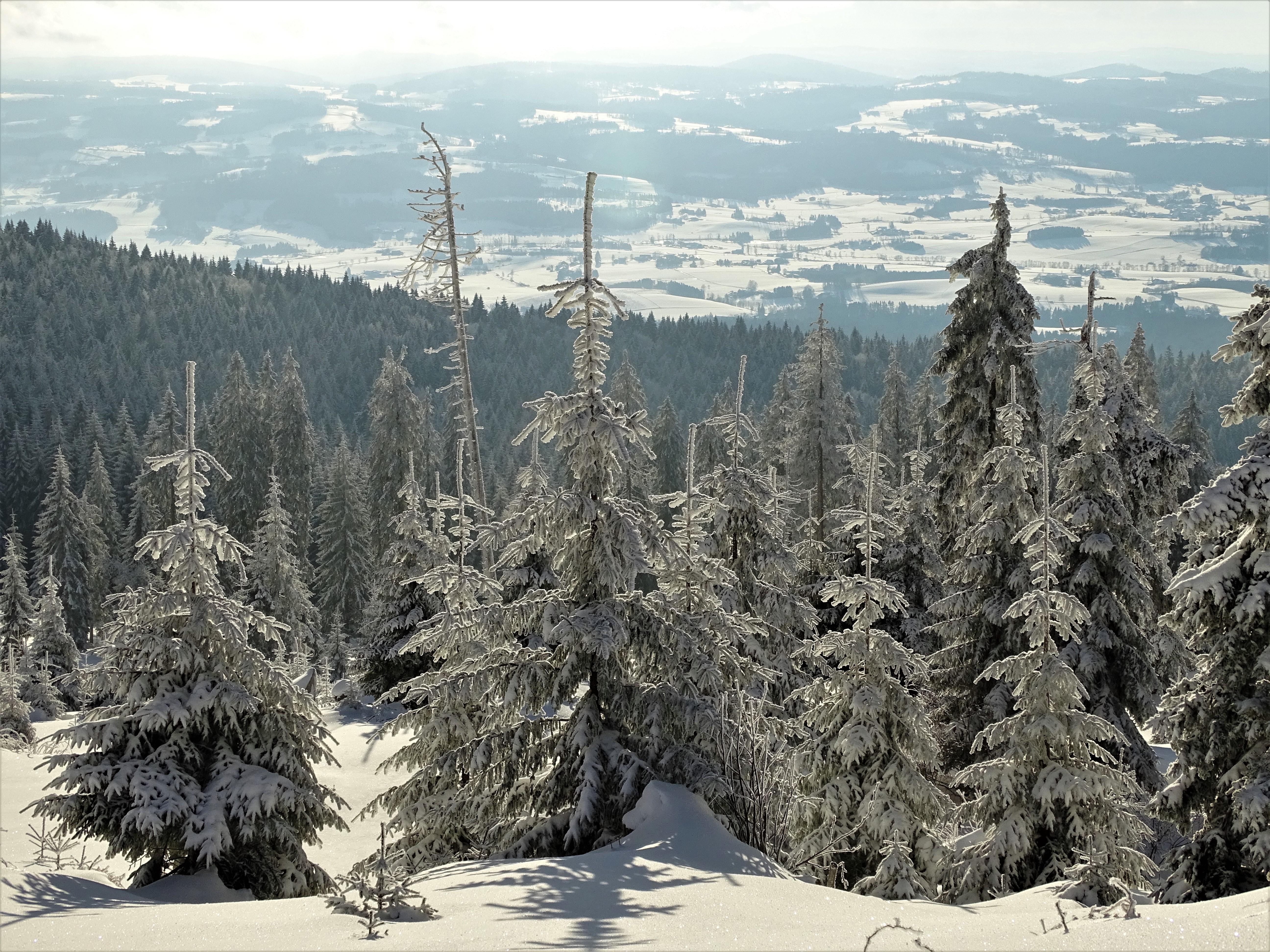 7-Dreisessel-Bayerischer-Wald-Nadia-Baumgart
