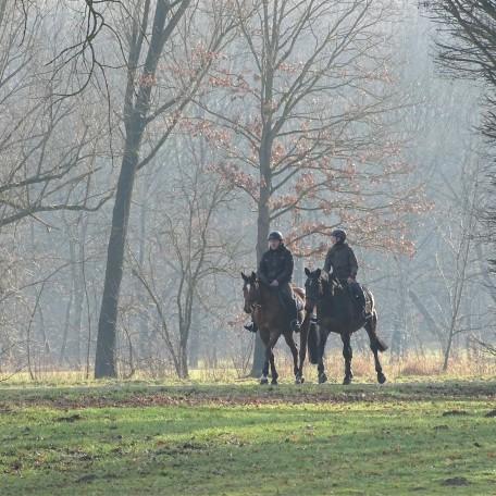 14-Pferde-Rottauensee-Foto-Nadia-Baumgart