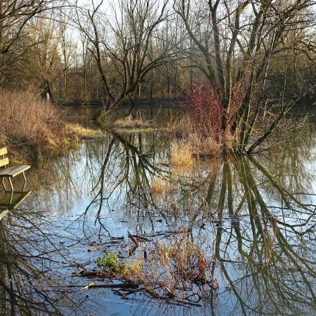 Fischweiher Bad Birnbach