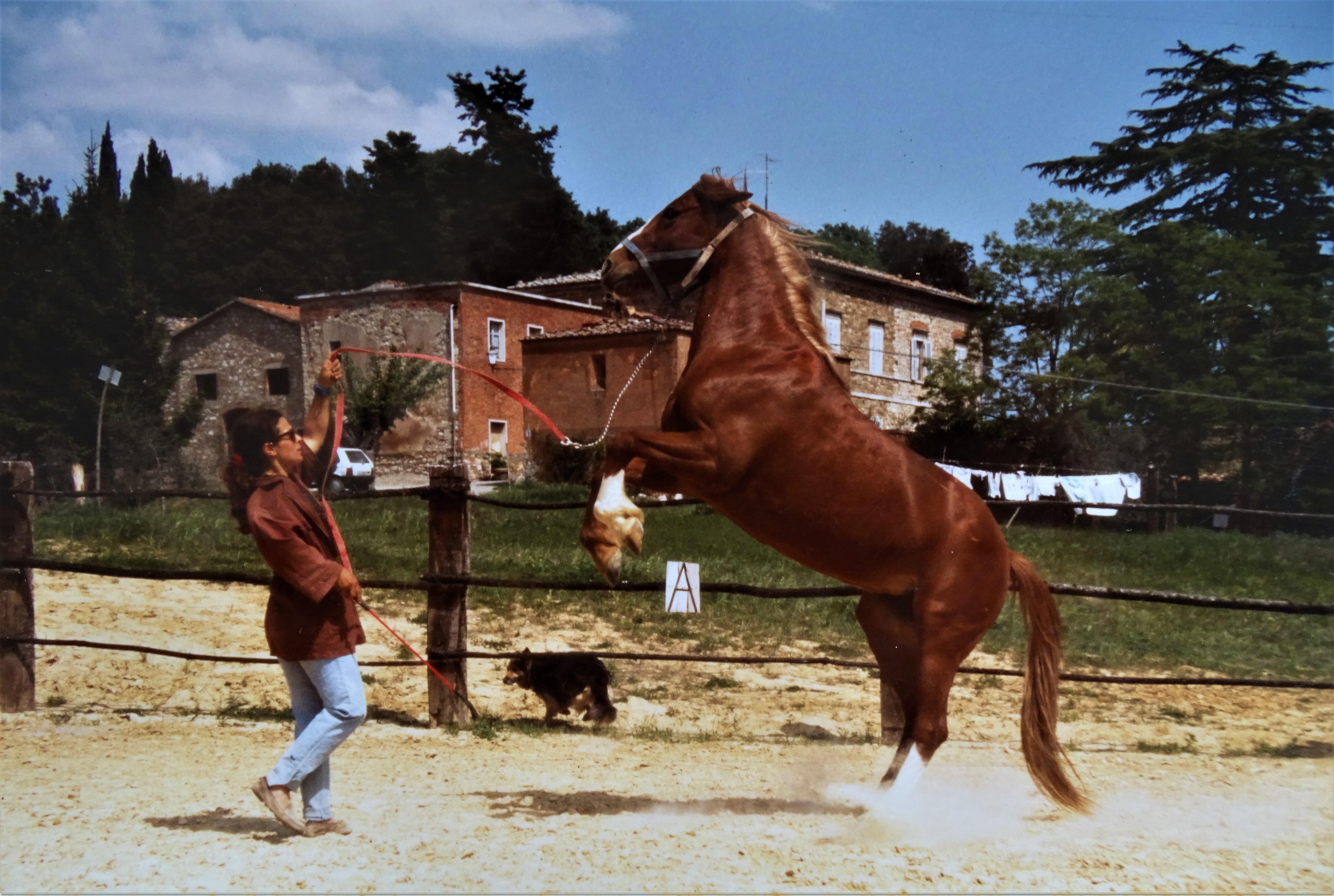 Nadia-Cavalli-Villa-dei-Boschi