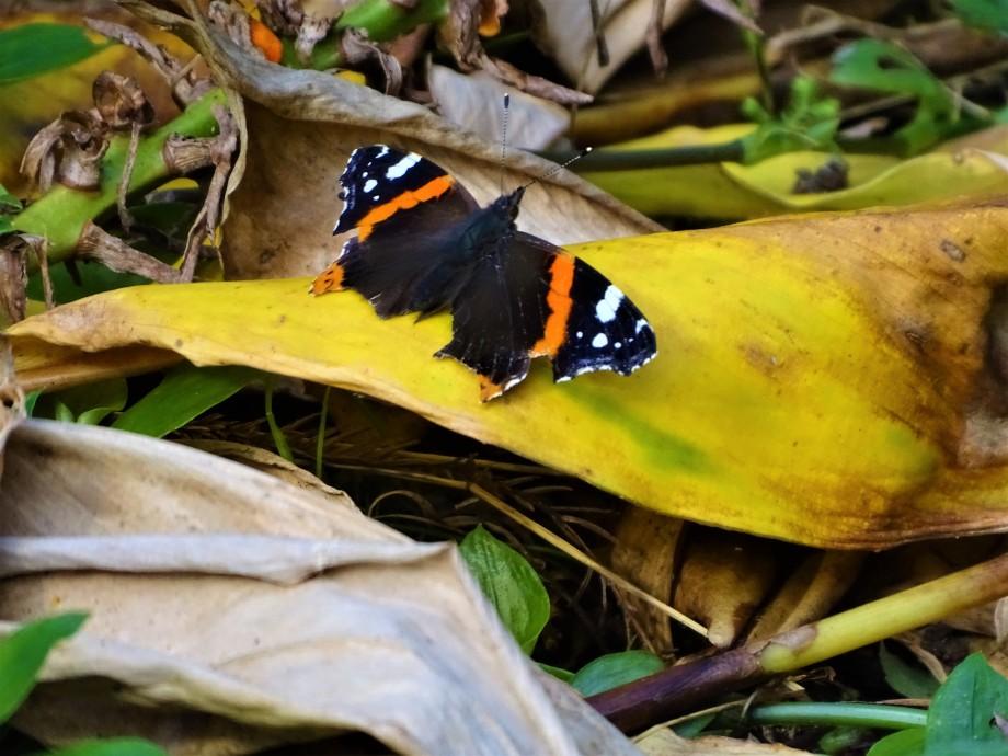 2-Schmetterling-Foto-Nadia-Baumgart