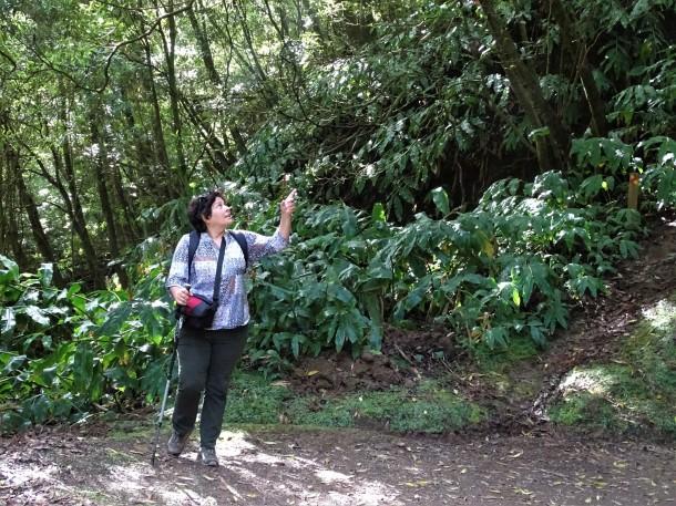 3-Wandern-Azoren-Nadia-Baumgart