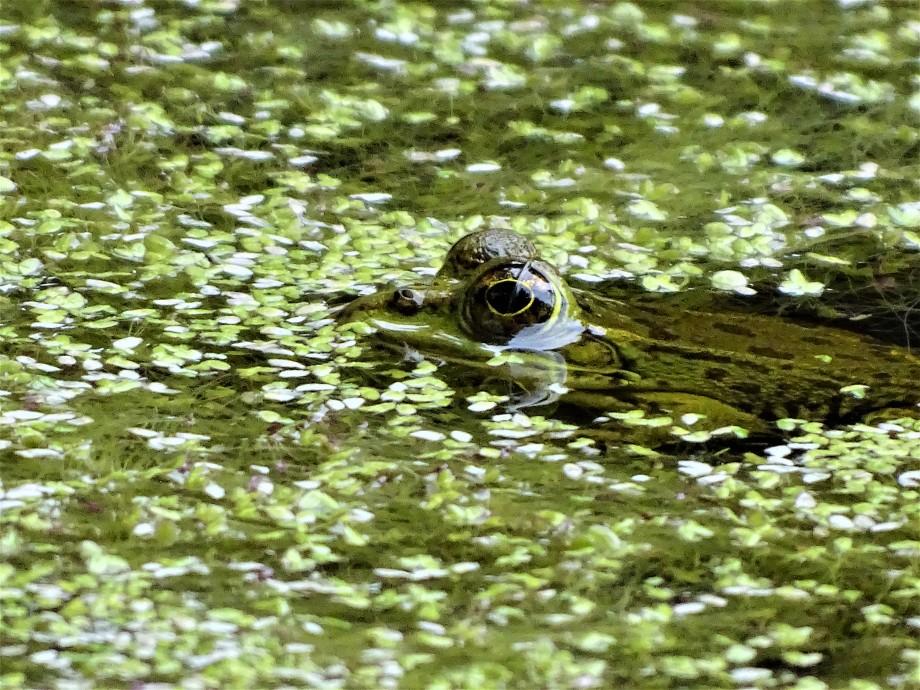 5-Frosch-Jardim-Botanico-do-Canto