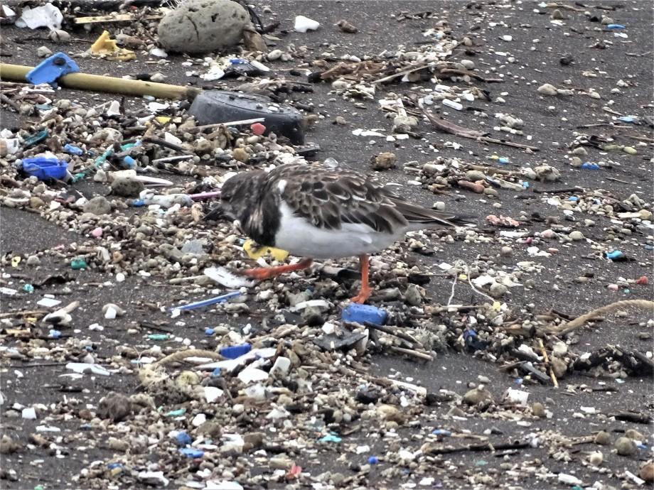 plastikmuell-azoren.tierquaelerei