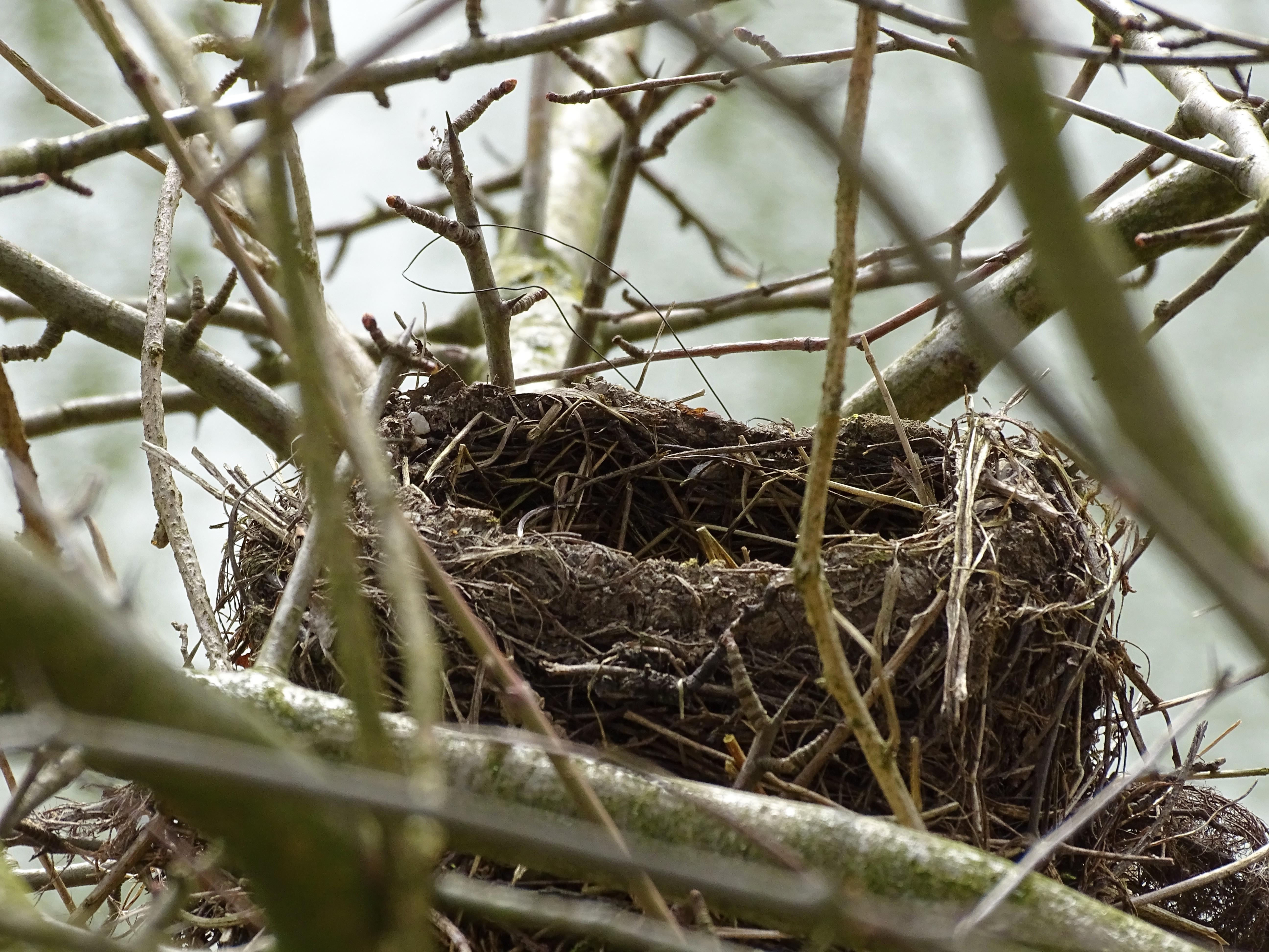 4-Nest-Kurpark-Bad-Birnbach-Foto-Nadia-Baumbach