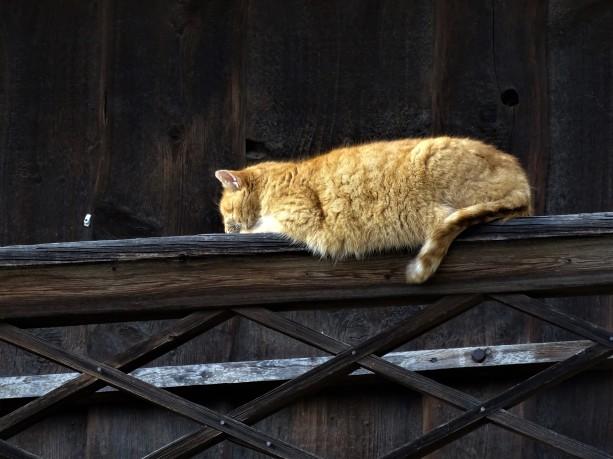 6-Katze-Dreiseithof-Johanniskirchen