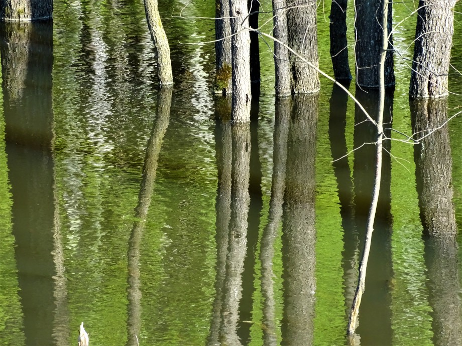 1-Spiegelungen-Bayerischer Wald