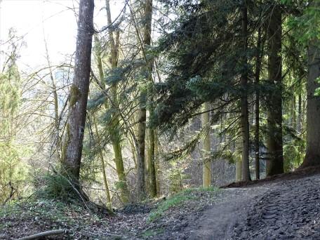 Wald an der Ilz