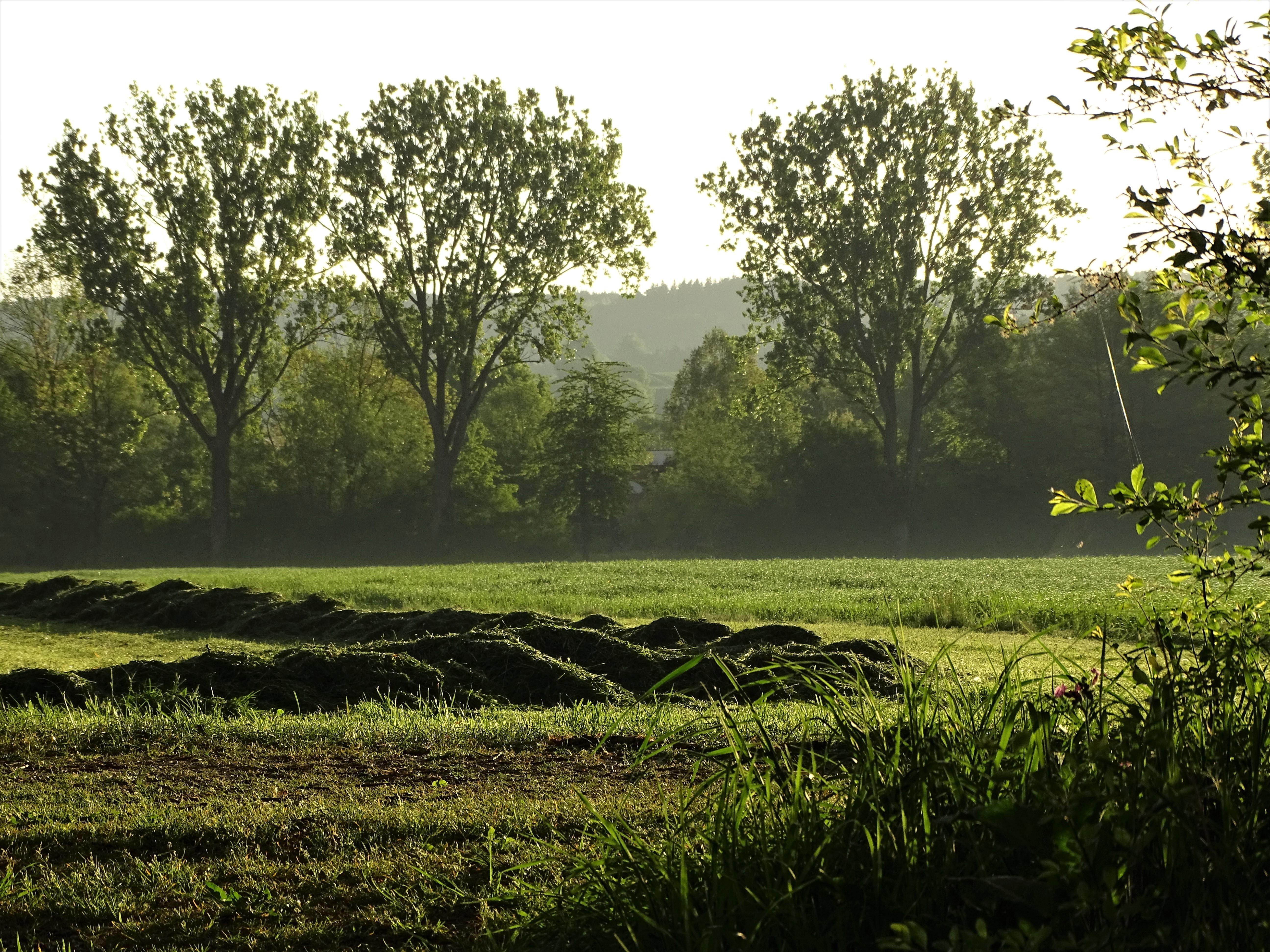 3-Kurpark-Badd-Birnbach-Foto-Nadia-Baumgart