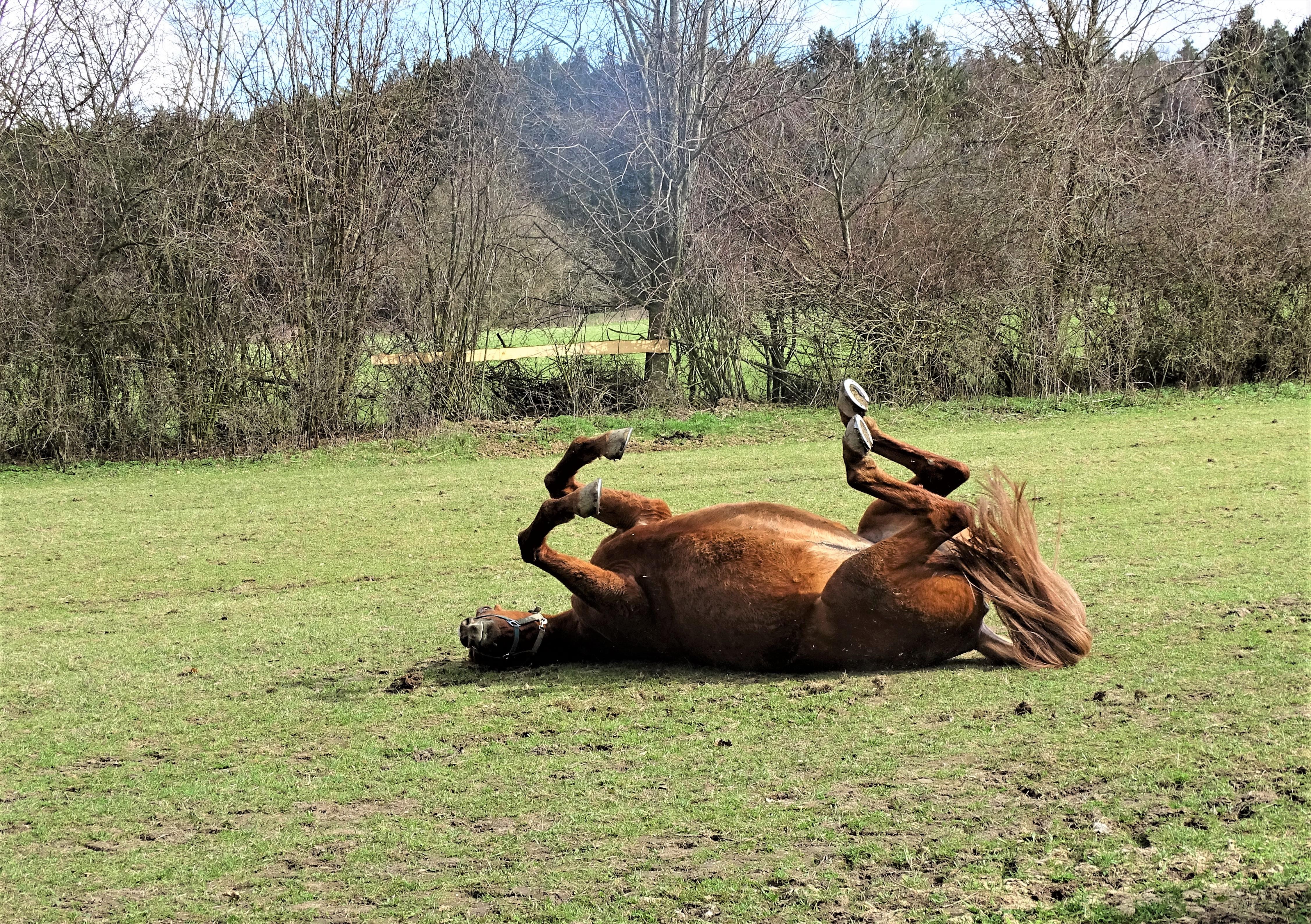 3-Pferd