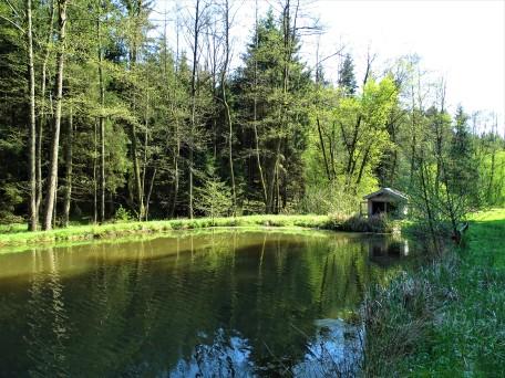 Teich bei Schönau