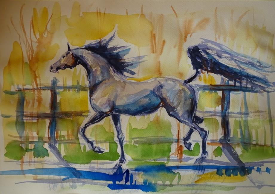 Cavallo-Pferd-Aquarelle-Nadia-Baumgart