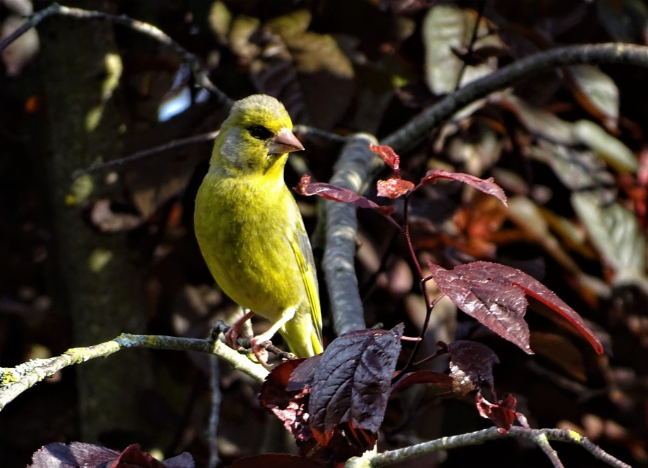1-gruenfink-2-nadia-baumgart