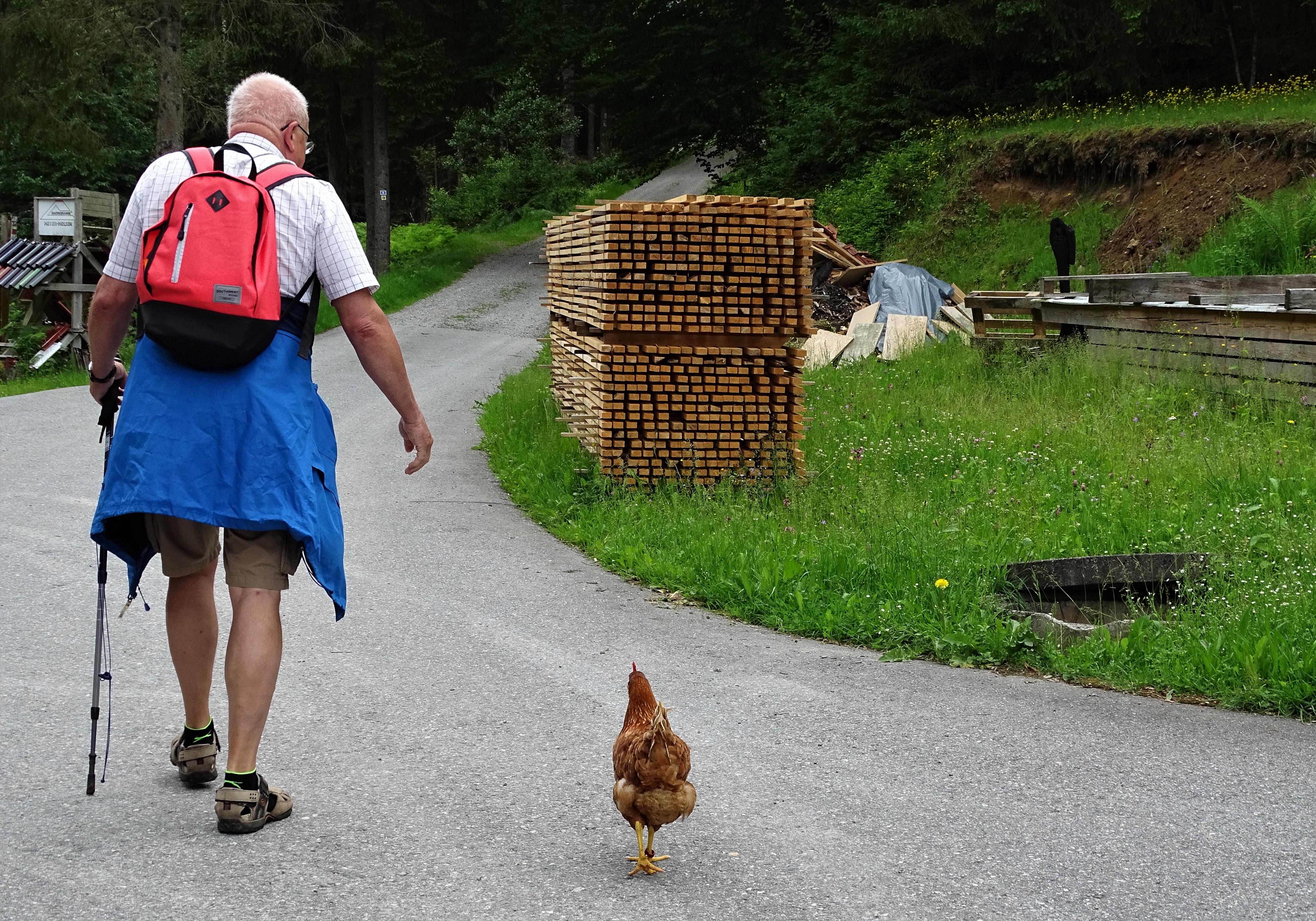 6-Huhnbegleitung