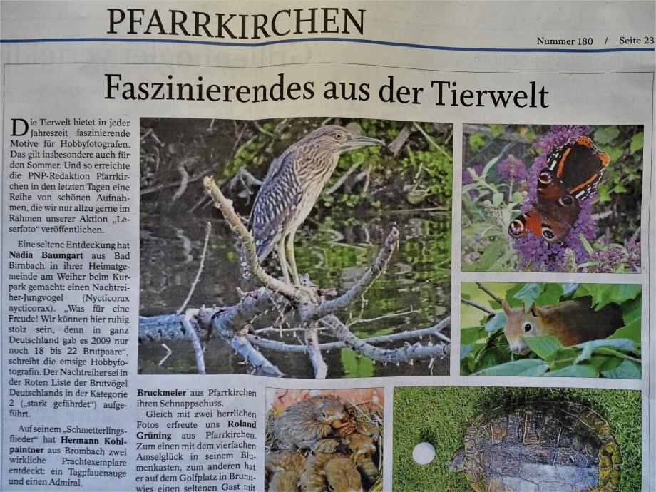 PNP-Nachtreiher-Pfarrkirchen-Bad-Birnbach