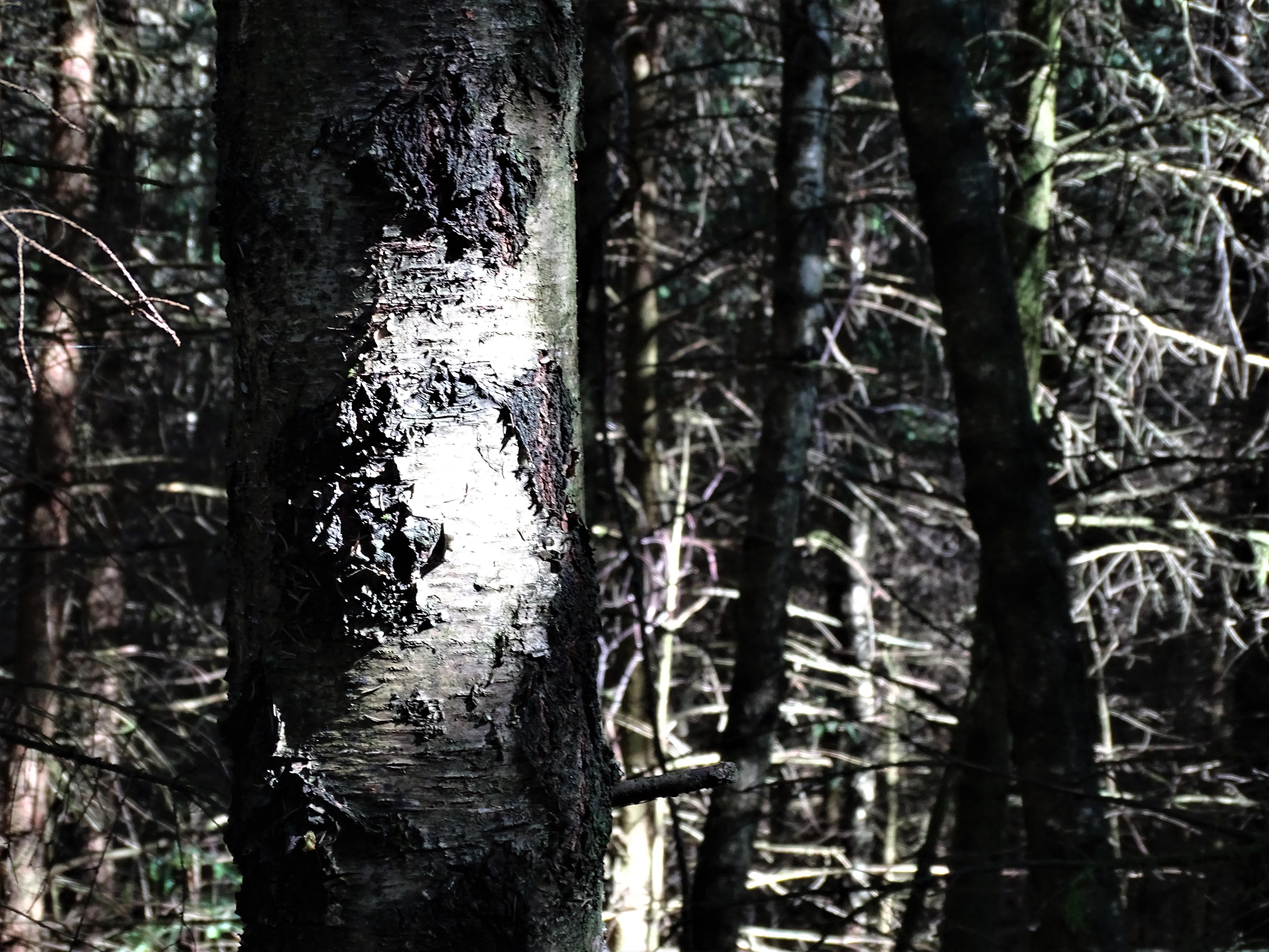 4-Wald-Foto-Nadia-Baumgart