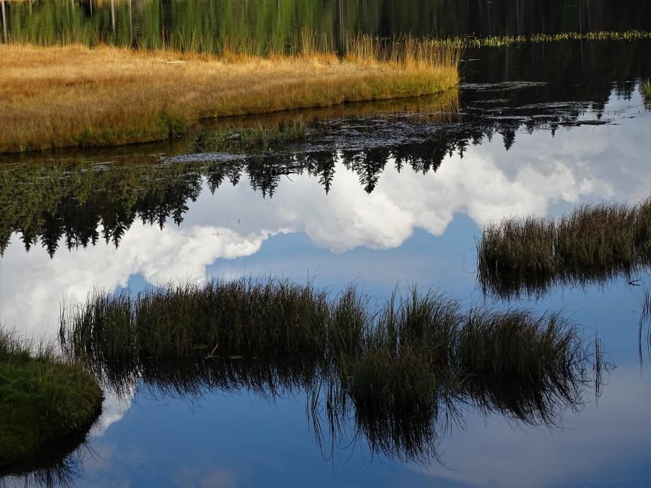 1-Bayerischer-Wald-Foto-Nadia_Baumgart