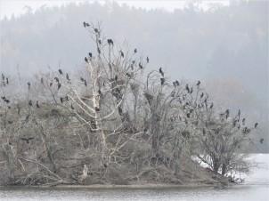 Kormoran-Baum