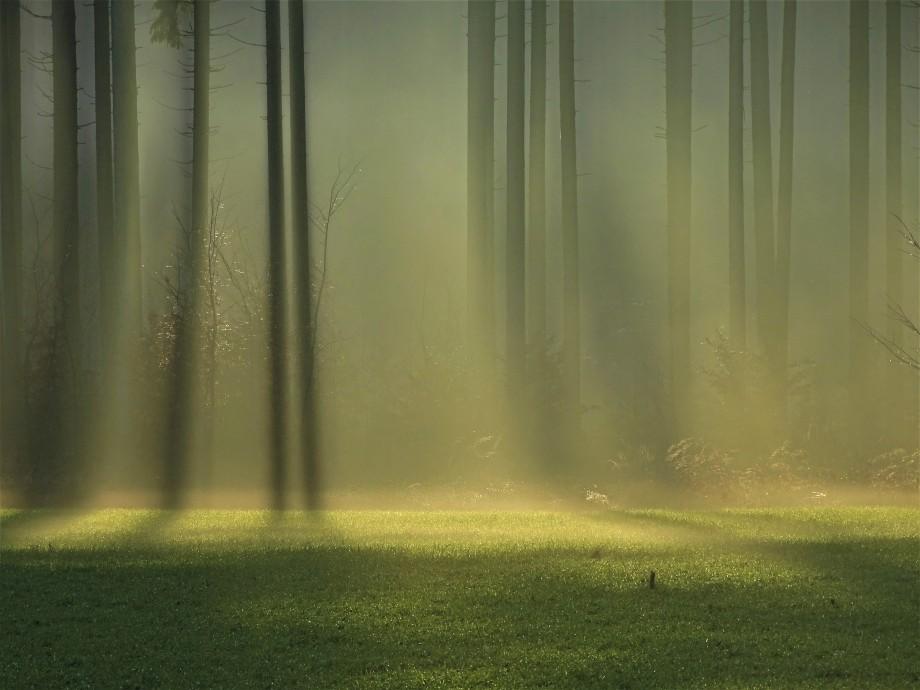 3-Wanderung_Ried_Hirschbach_Nadia_Baumgart