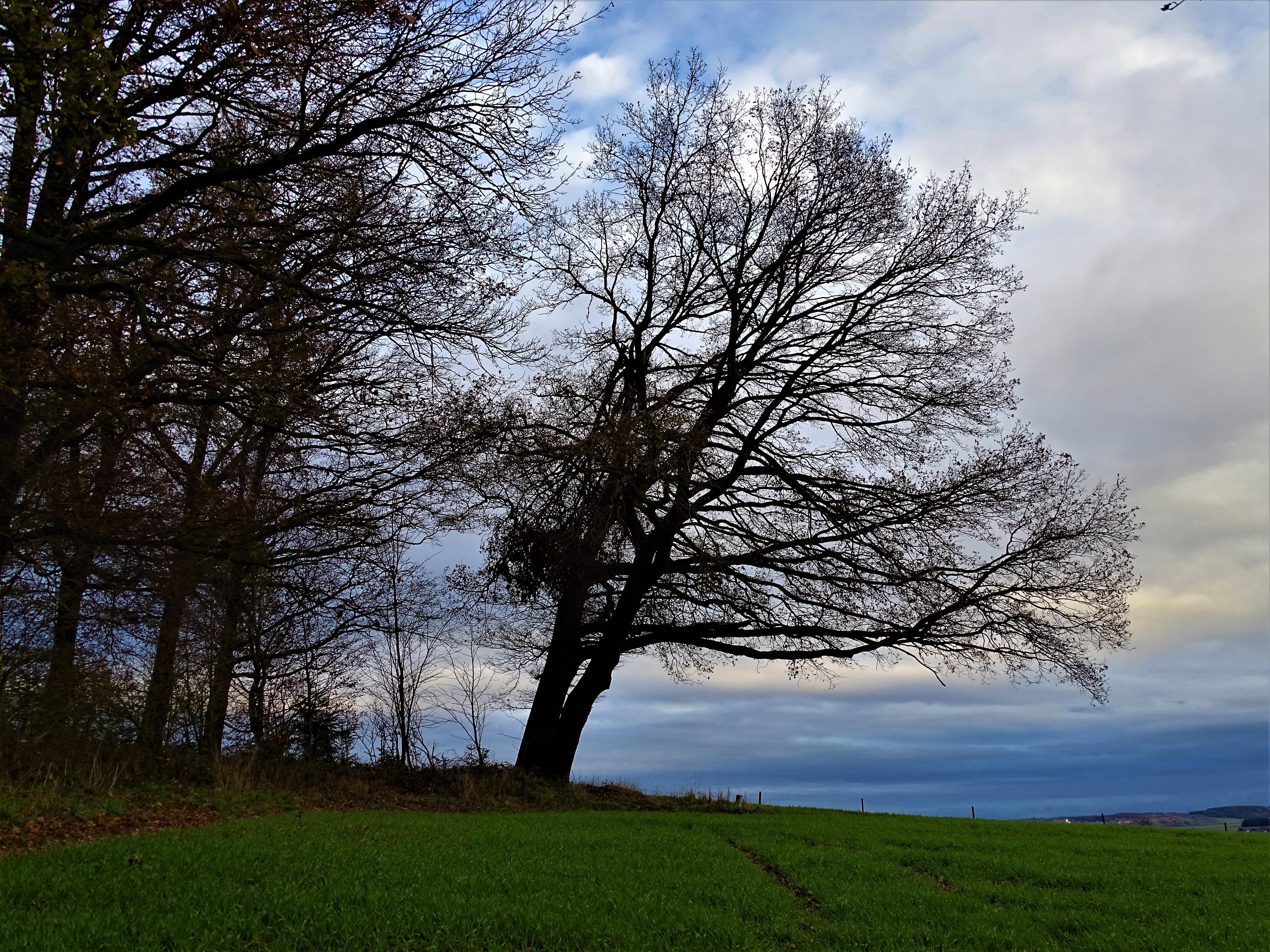 Lugenzwald-Bad Birnbach