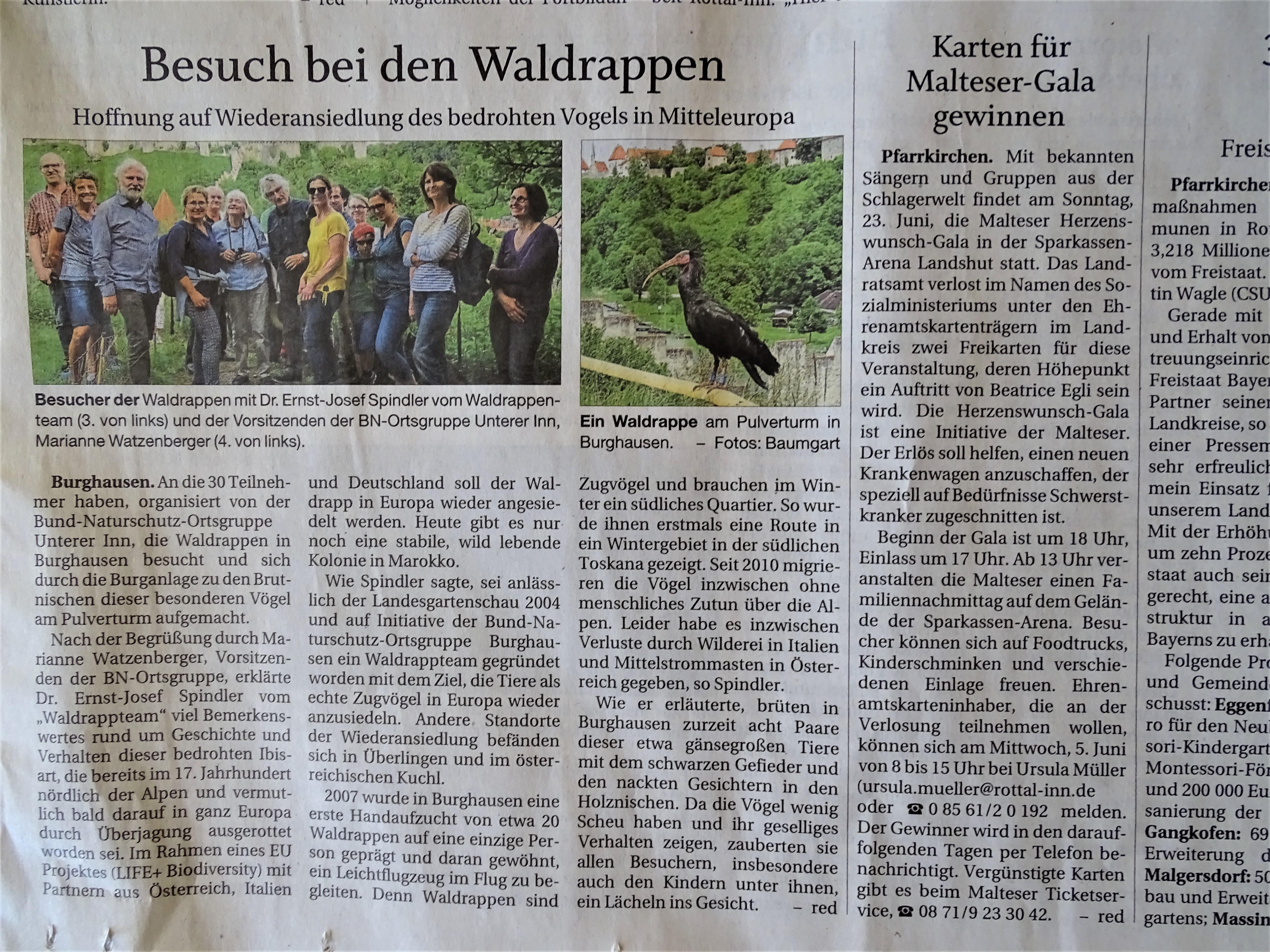 Besuch der Waldrappen in Burghausen
