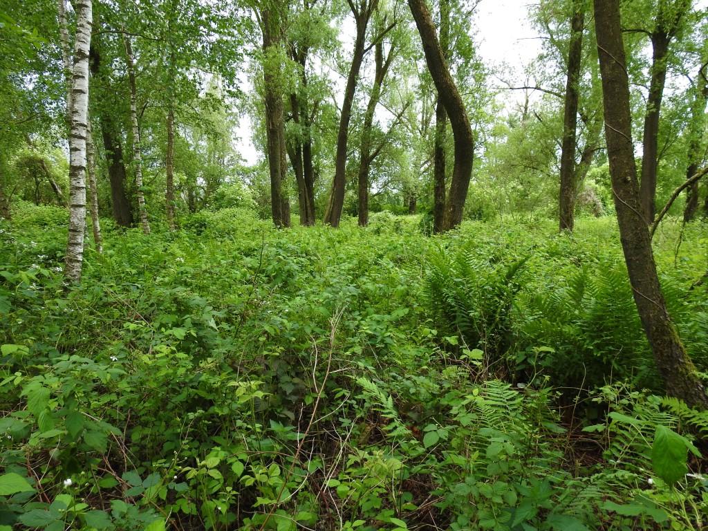 """Das """"Wilde Eck"""" ist ein kleiner Auwald in Bad Birnbach - Ein geschütztes Biotop."""