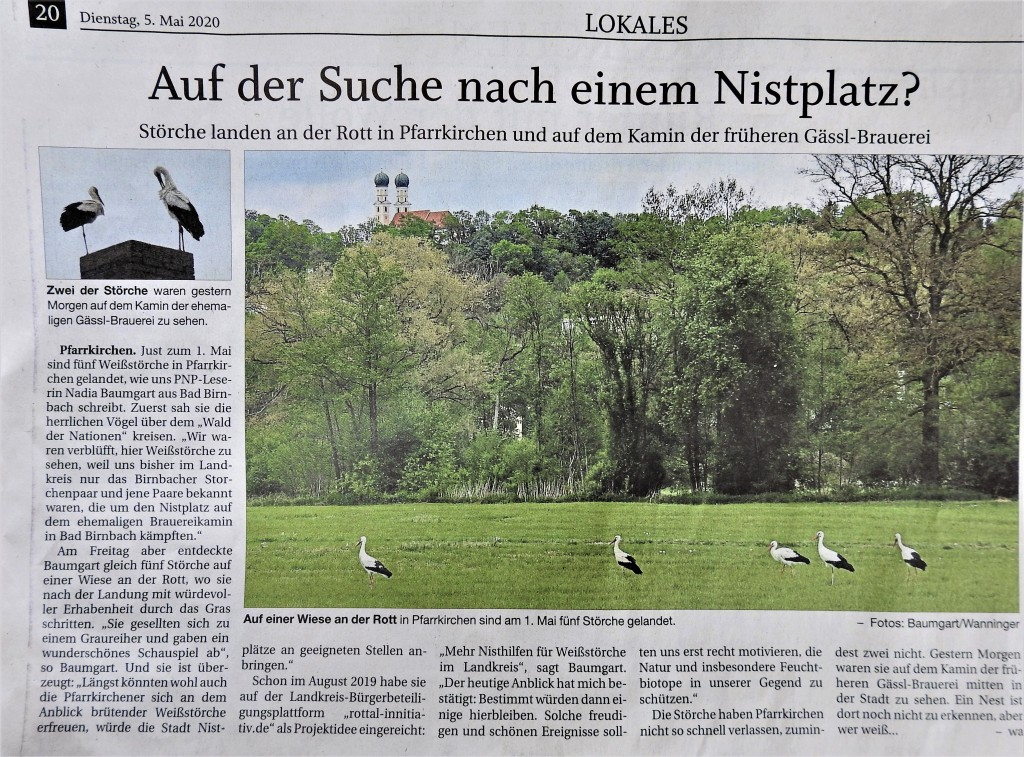 Störche-in-Pfarrkirchen