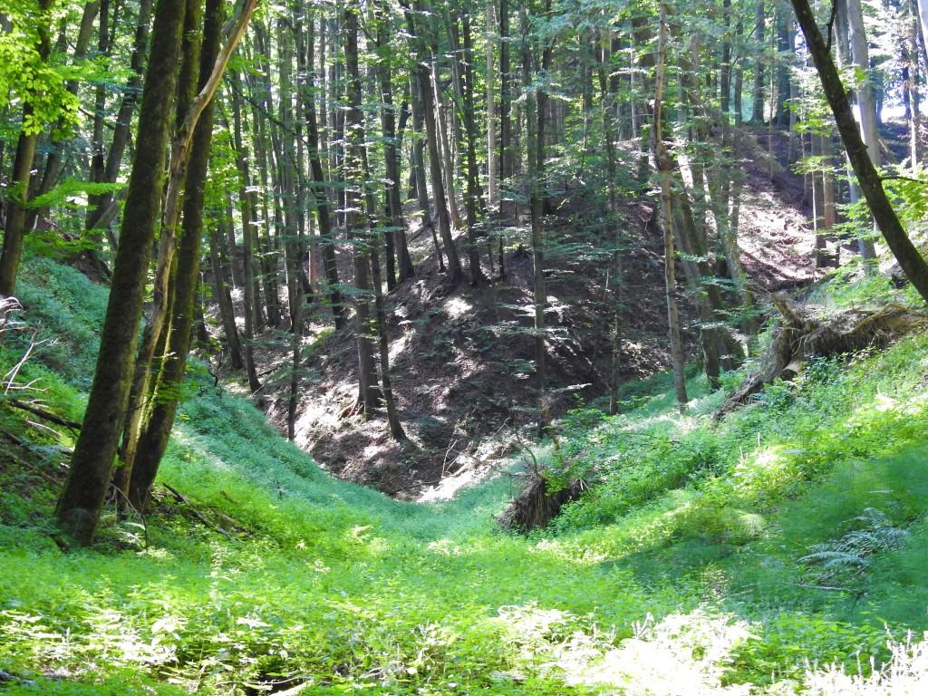Naturwald in Niederbayern