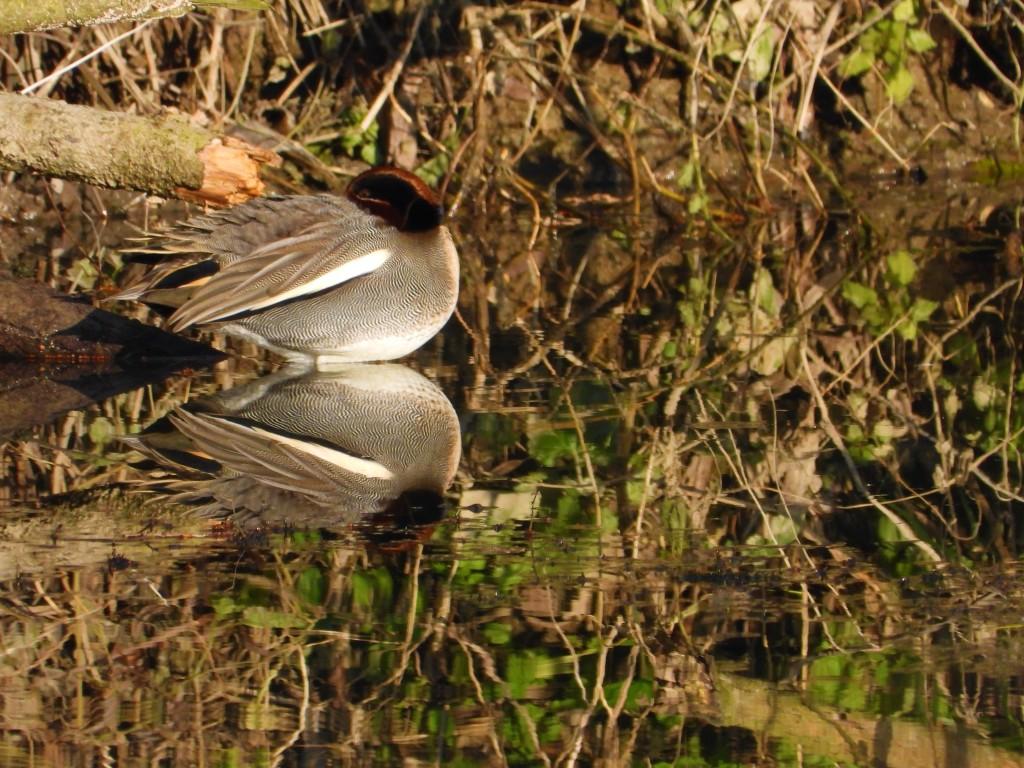 Vögel im Winter an der Rott