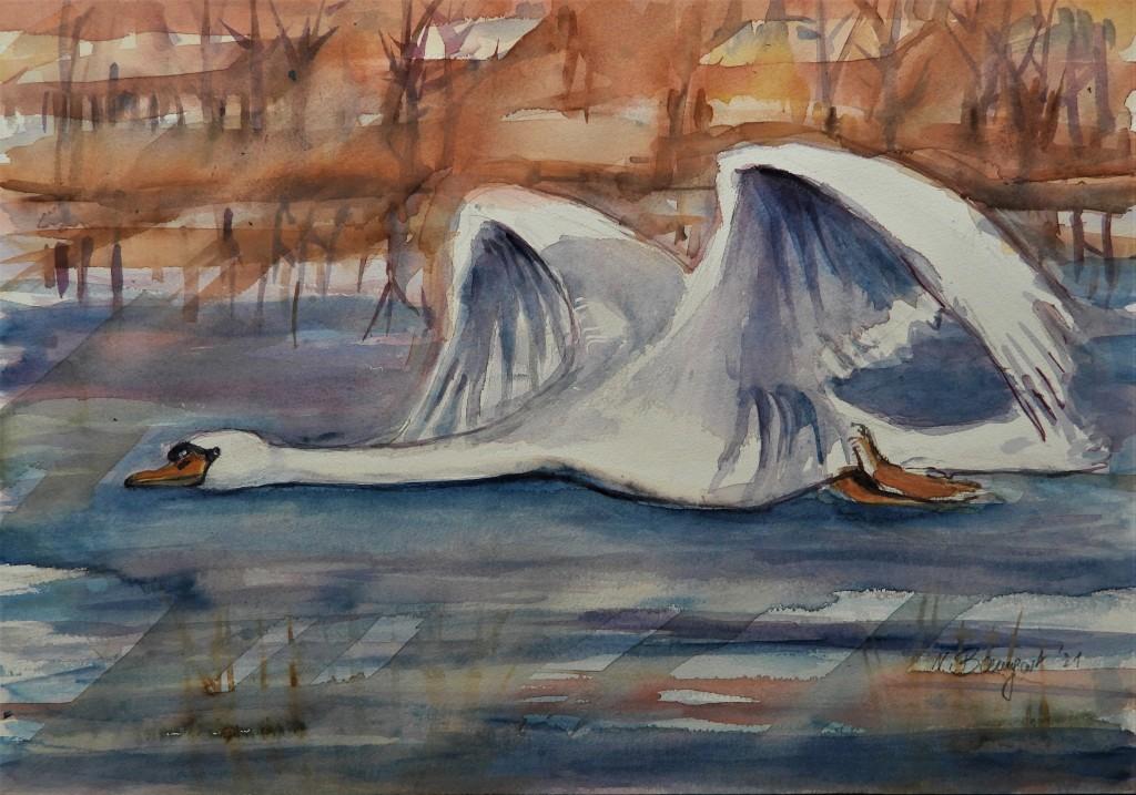 Fliegender Schwan - Ein Aquarell von Nadia Baumgart