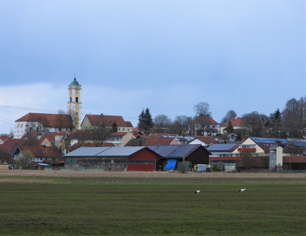 Storchenpaar in Bad Birnbach