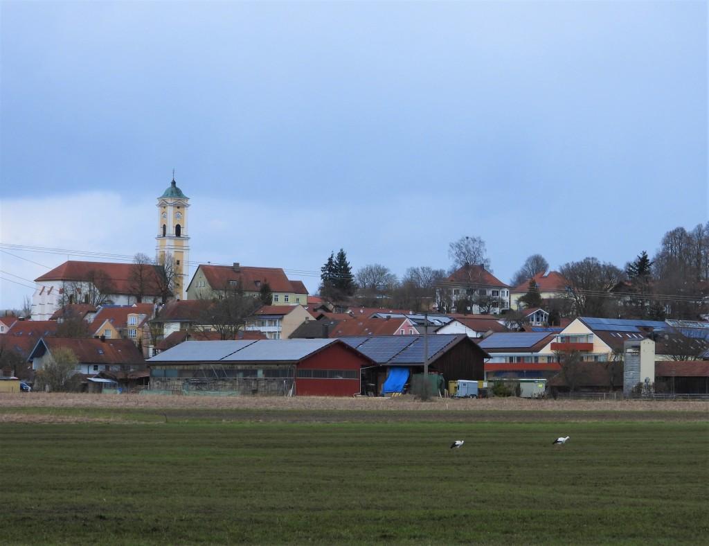 Storchenpaar in Bad Birnbach