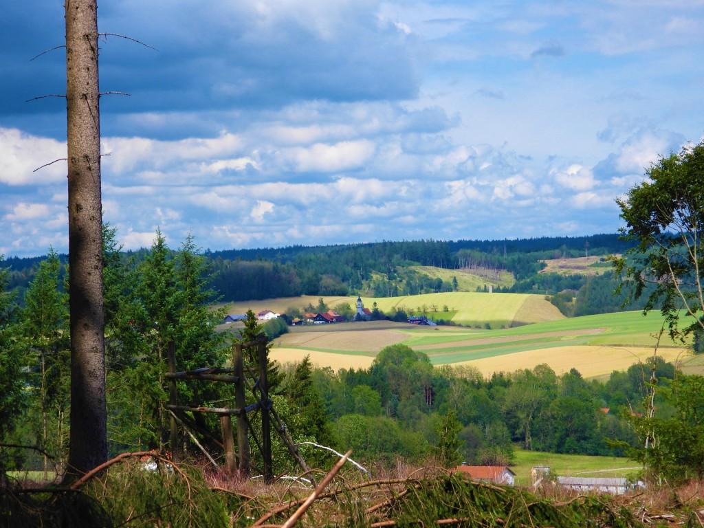 Kahlflächen im Wald lassen neue Sichten entstehen. Hier der Lugenz-Wald.