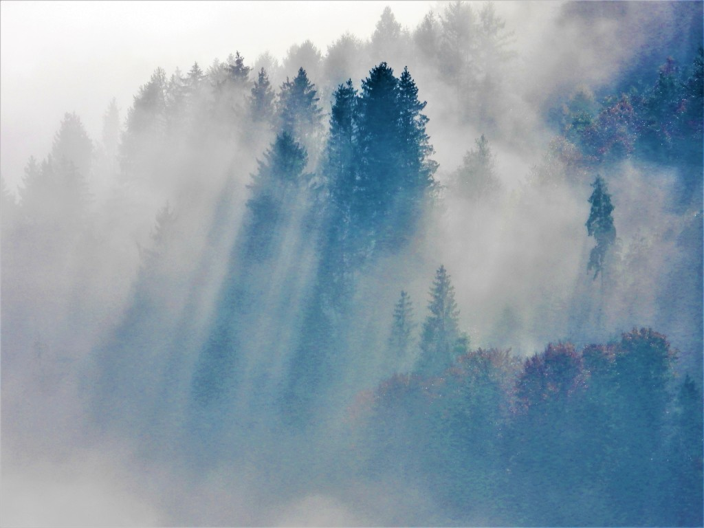 Naturfotografie - Nebel im Wald